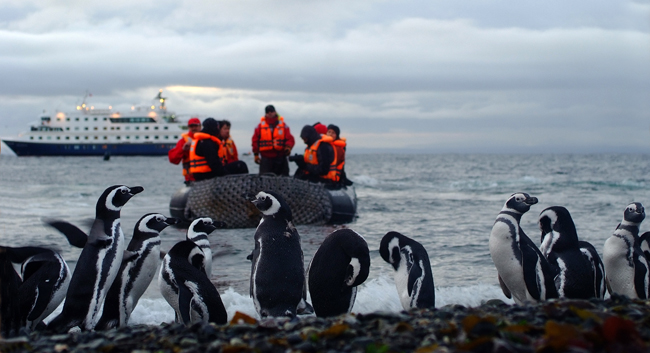Close encounters with penguins on an Australis sailing.