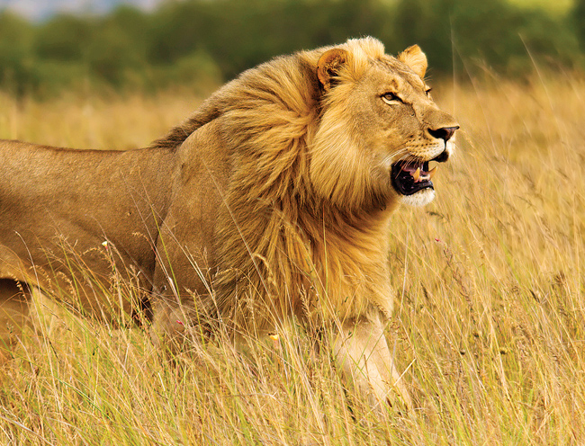 View lions on Great Safaris two new agent FAMs.