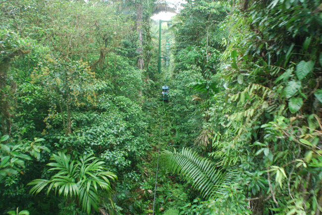 An aerial tram view of the rainforest.