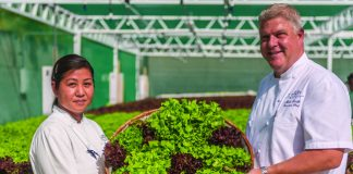 Chefs with lettuce from the hydroponic garden at Grand Hyatt Kauai Resort & Spa.