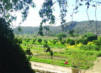 Huerta Los Tamarindos organic farm and restaurant. (Photo credit: Paloma Villaverdo de Rico)