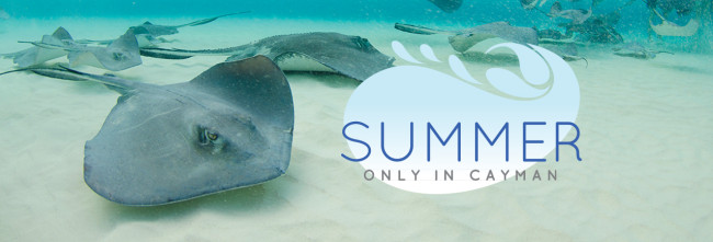 WebsiteHeader_StingrayOICSummer