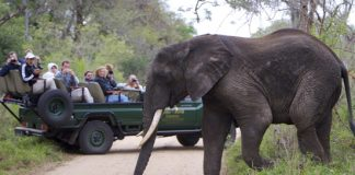 Experience South Africa with Lion World Travel.