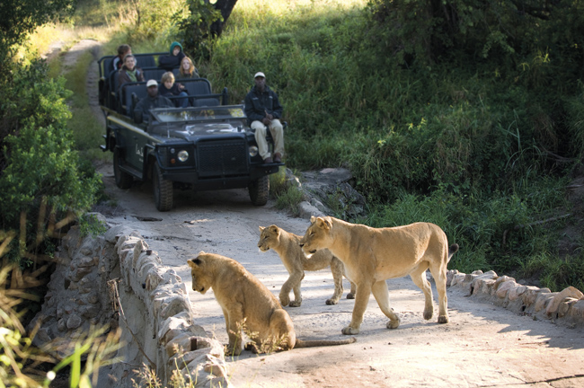 A safari drive with African Travel, Inc.