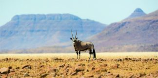 African Travel, Inc.'s new Namibia Desert Escape tour allows guests to can spot wild game and explore remote locations in Africa. (Photo Credit: Dana Allen)