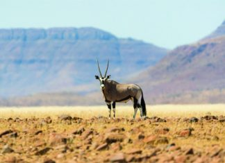 African Travel, Inc.'snewNamibia Desert Escapetourallows guests to can spot wild game and explore remote locations in Africa. (Photo Credit: Dana Allen)