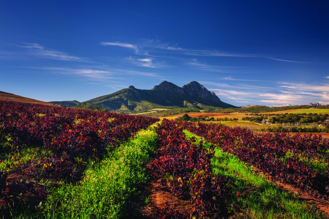 South African Airways Vacations offers self-drive tours of South Africa's Garden Route.