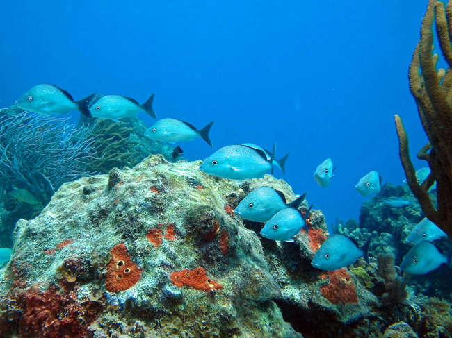 Zegrahm Expeditions Rainforests & Reefs cruise offers a complimentary diving excursion. (Photo credit: Jack Grove)
