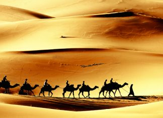 Guests on Cox & Kings' customized tour options in Egypt can opt for a camel ride in the Sahara.