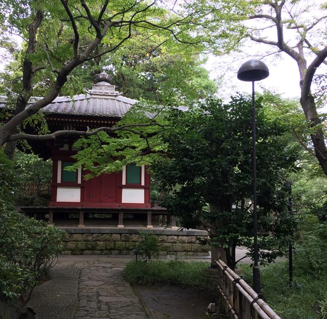 A Japanese garden.