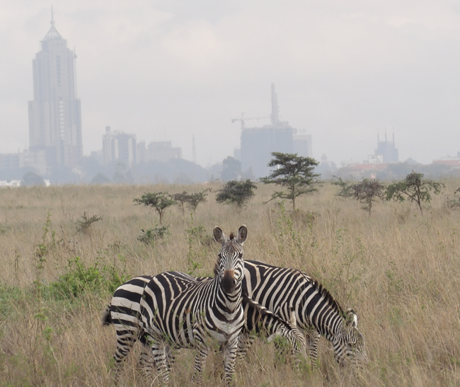 You can see the city skyline from the Nairobi National Park.