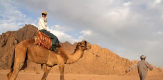 Guests traveling by camel in Egypt.