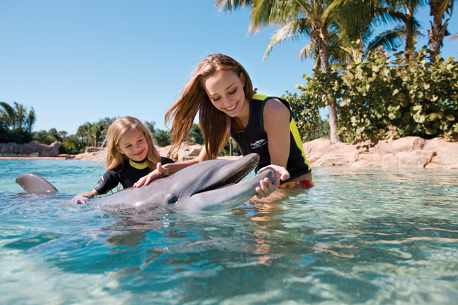 Guests can hug, kiss, and swim with dolphins during the Dolphin Swim Experience.