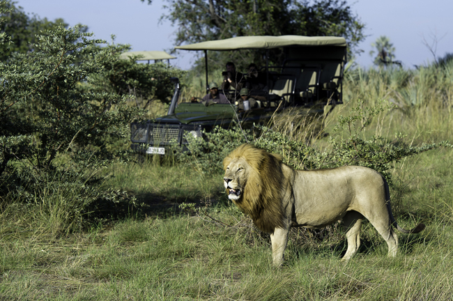Wild Planet Adventures has created seven new itineraries in celebration its 25th anniversary.(Photo credit:Wild Planet Adventures)