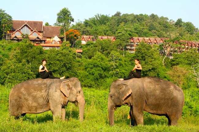 Anantara Golden Triangle Elephant Camp & Resort Where Wellness Meets Nature holistic program includes activities such as elephant yoga.