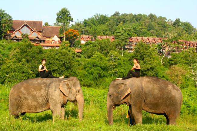 Anantara Golden Triangle Elephant Camp & ResortWhere Wellness Meets Natureholisticprogram includesactivitiessuch as elephant yoga.