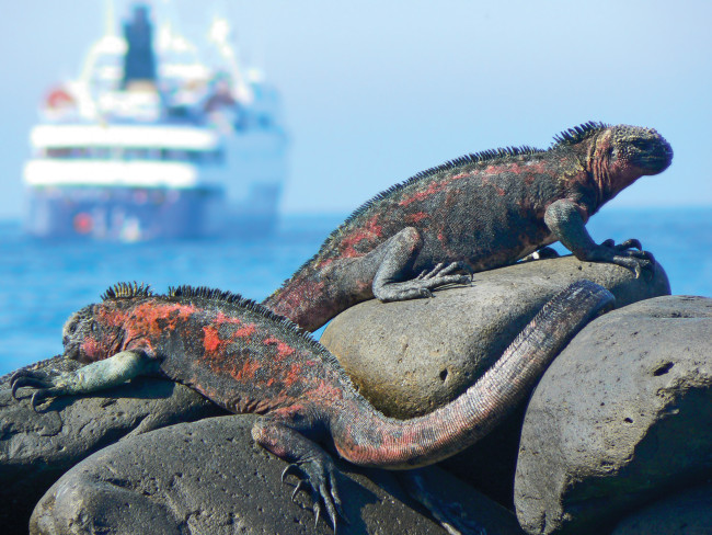 Celebrity Cruises is planning to acquire Galapagos Islands tour operator Ocean Adventures and its two ships, upping its Galapagos Islands guest capacity to 65 percent.