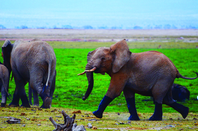 CW Safaris takes clients to Botswana, said to have the highest elephant population in Africa.