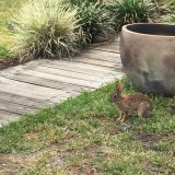 Wildlife spotted—a bunny.