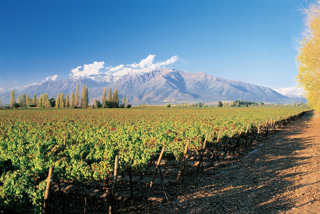 Flash Tour USA's Chile FAM visits some of the country'swine lands.