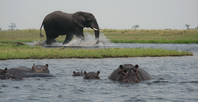 Collette's 14-day Exploring South Africa, Victoria Falls & BotswanaTrip of a Lifetimeitinerary features a game drive atChobe National Park in Botswana.