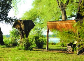 Elephant sighting at Chongwe River Camp in Zambia is on the INCA itinerary.