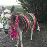 Margarita, the donkey, is a friendly local at Altos de Chavon.