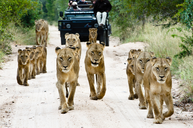 African Travel, Inc.'s travel agent competition to win afive-star luxury safari vacation for four to South Africa.