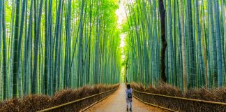 The Bamboo Forest in Kyoto, Japan.