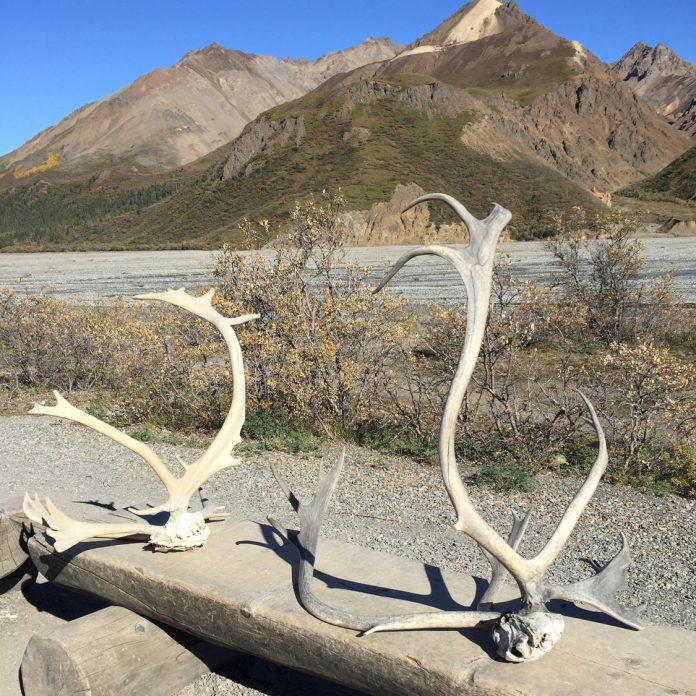 Denali National Park. (Paloma Villaverde de Rico)
