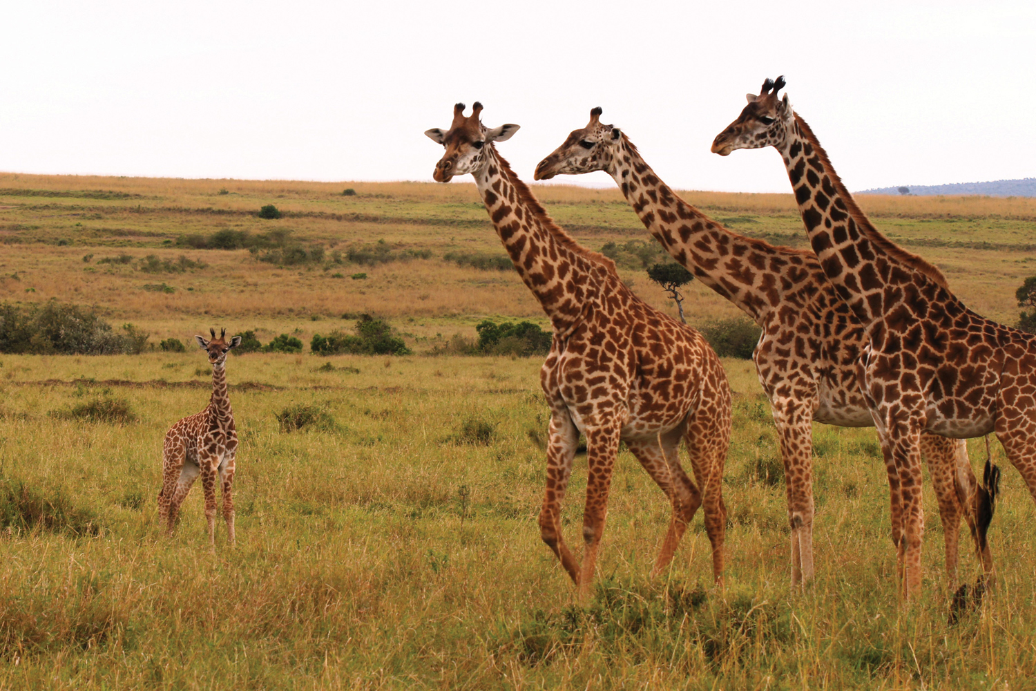Globus is offering new tour options in Africa.