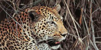 Flash Tour USA'sSouth Africa FAM exploresNelspruit,Hoedspruit,Port Elizabeth and Cape Town.