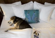 Guests of The Alfond Inn at Rollins in Central Florida can treat their canine Valentine to the new Puppy Love package this February.