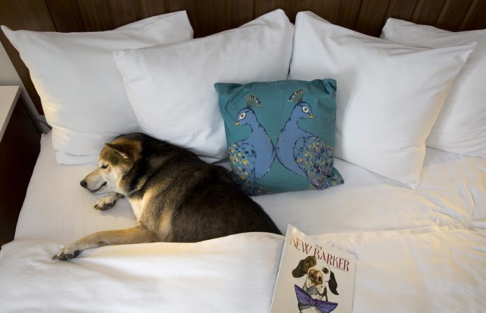 Guests ofThe Alfond Inn at Rollins in Central Florida can treat their canine Valentine to the newPuppy Love package this February.