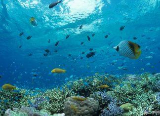 The tropical Okinawa islands.