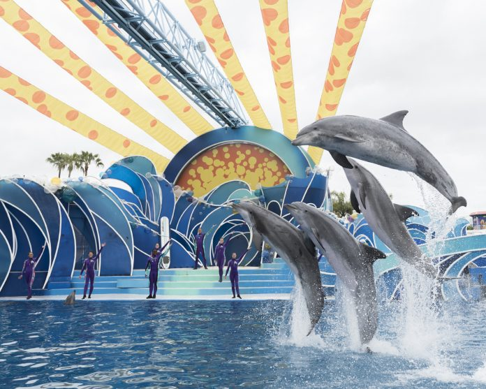 SeaWorld Orlando is launching a new Dolphin Days show.
