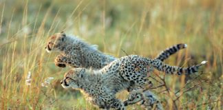 African Travel, Inc. is offering travel agents an additional $100 bonus commission on any of its 2017 safaris of five nights or more. (Photo credit: Christian Sperka)