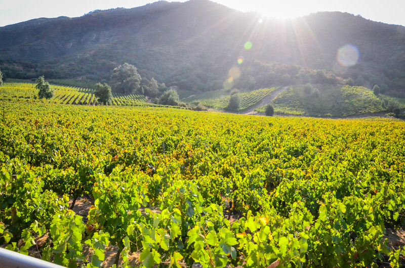 South Expeditions is offering eco-friendly tours in Chile's Colchagua Valley this fall.