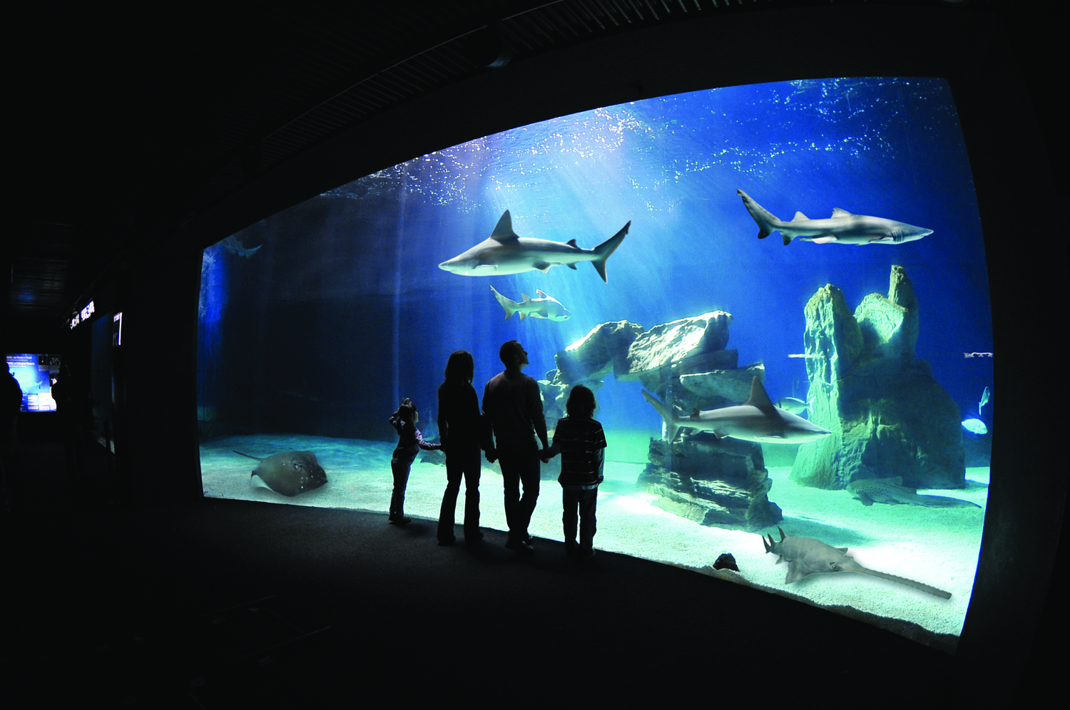 MSC Cruises offers an exclusive tour of Italy's largest aquarium.