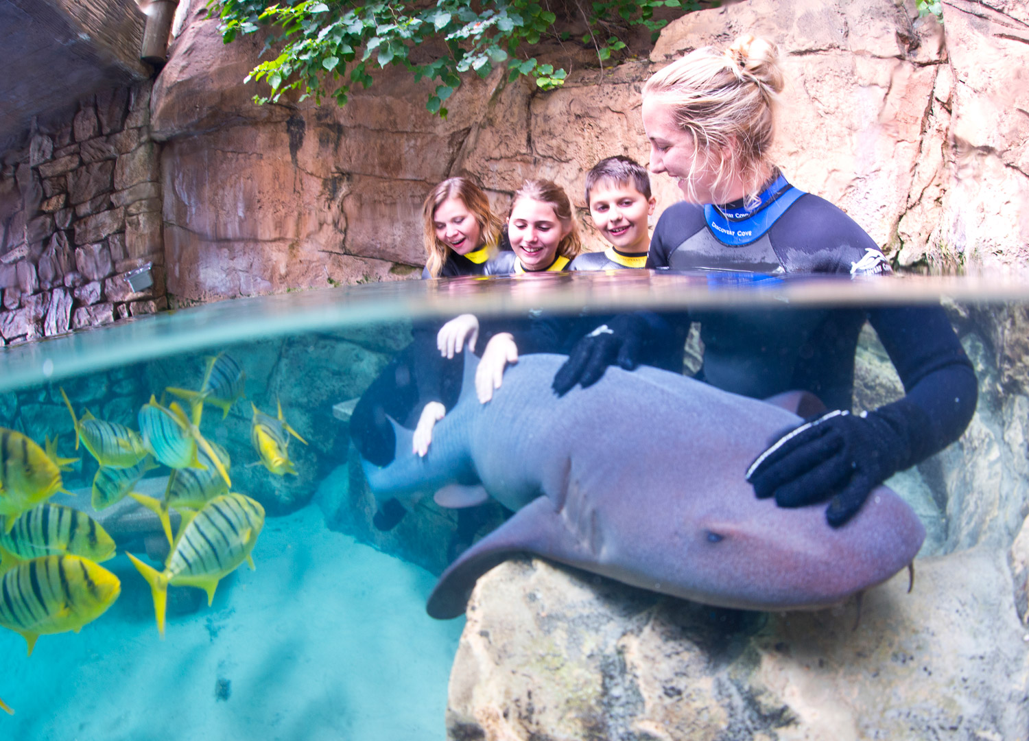 Swim with dolphins, snorkel tropical reefs, come face to face with sharks, explore underwater shipwrecks, or just relax on the white-sand beach at Discovery Cove, Florida.