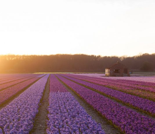 Butterfield & Robinson's new trips for 2018 includes a6-dayHolland Walkingitinerary.
