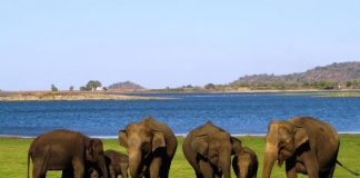 Ideal for animal lovers, Culture Holidays' 7-day Sri Lanka FAM allows travelers to spend time helping and feeding elephants.