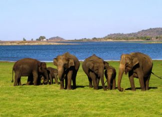 Ideal for animal lovers, Culture Holidays'7-daySri Lanka FAMallows travelers to spend time helping and feeding elephants.