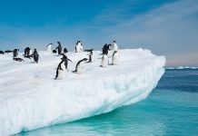 Antarctica is one of many places your clients can visit on Cox & Kings' new itineraries.
