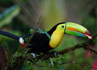 Guests can get up-close and personal with the diverse Costa Rican wildlife during Austin Adventures' new tour.
