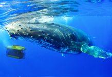 Scenic Eclipse's submarine will provide the opportunity for unique experiences.