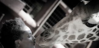 Interacting with giraffes is one activity agents can look forward to on this Kenya FAM trip.