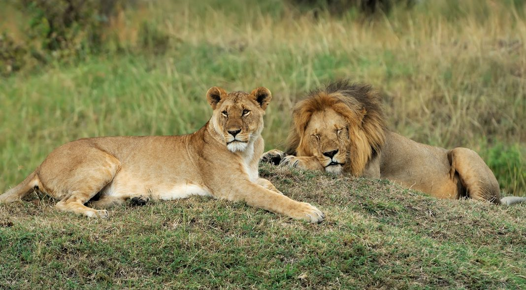 Discounts on South African Airways Vacations' offerings include safari packages.
