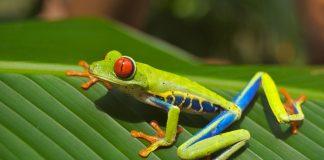 Costa Rica FAM