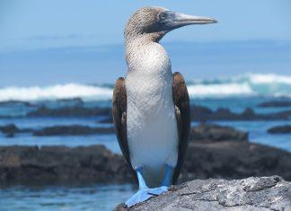 Lindblad Galapagos